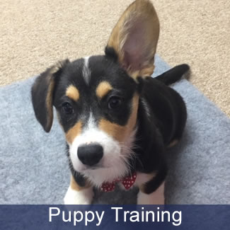 Puppy Training