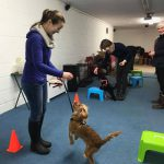 Puppy Advanced training Kent